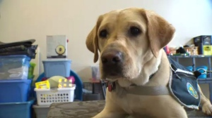 Shortage of service dogs in Edmonton