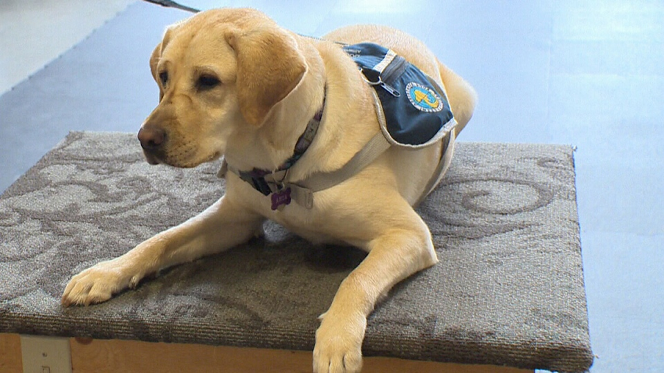 families seeking autism service dogs face years