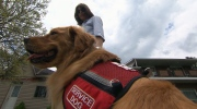 CTV National News: Autism dogs in high demand