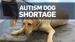 Families face long wait for autism service dogs