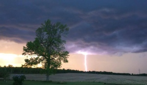 A bright lightning bolt strikes the tree lined horizon in Newington, Ont. (Krista Cummings/CTV Viewer)