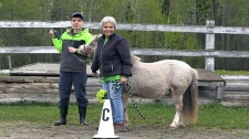 Timmins Therapeutic Riding Association
