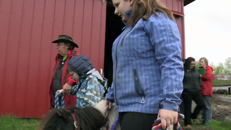 Volunteers teach participants how to care for the horses.