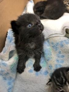 Kittens found in recycling bin