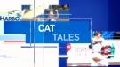 cat tles