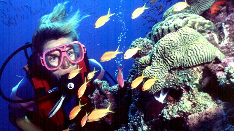 In this undated file photo, a diver swims on Australia's Great Barrier Reef. (AP Photo/Brain Cassey, File)