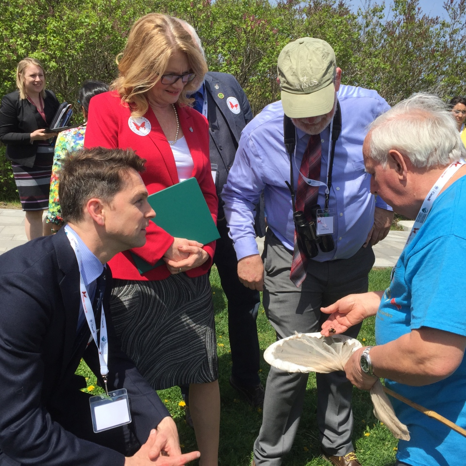 MP Will Amos, Parliamentary Secretary for Science Kate Young, MP Richard Cannings, and insect -scientist Henri Goulet inspect a COSEWIC-listed pollinator tallied at the Parliament Hill bioblitz, May 16, 2017. (CWF-FCF)