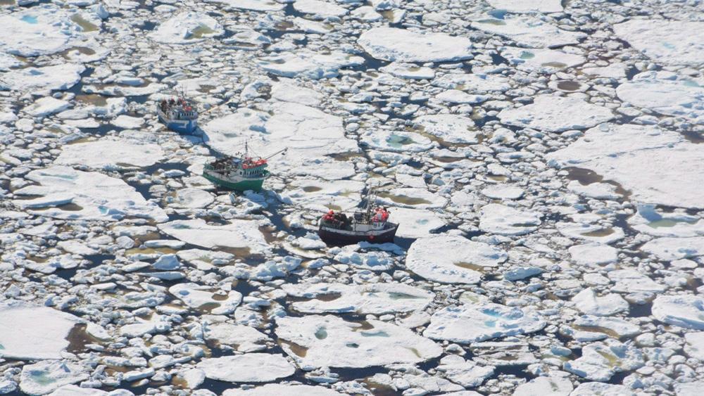 ice rescue Newfoundland