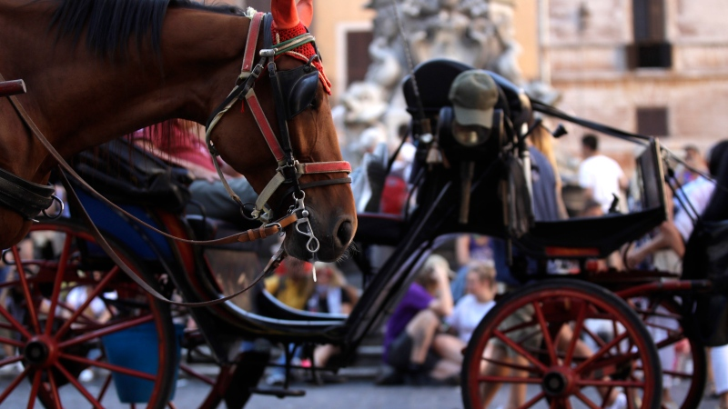 Horse-drawn carriages wait for tourists in Rome's Pantheon Square, Friday, June 9, 2017. (AP / Alessandra Tarantino)