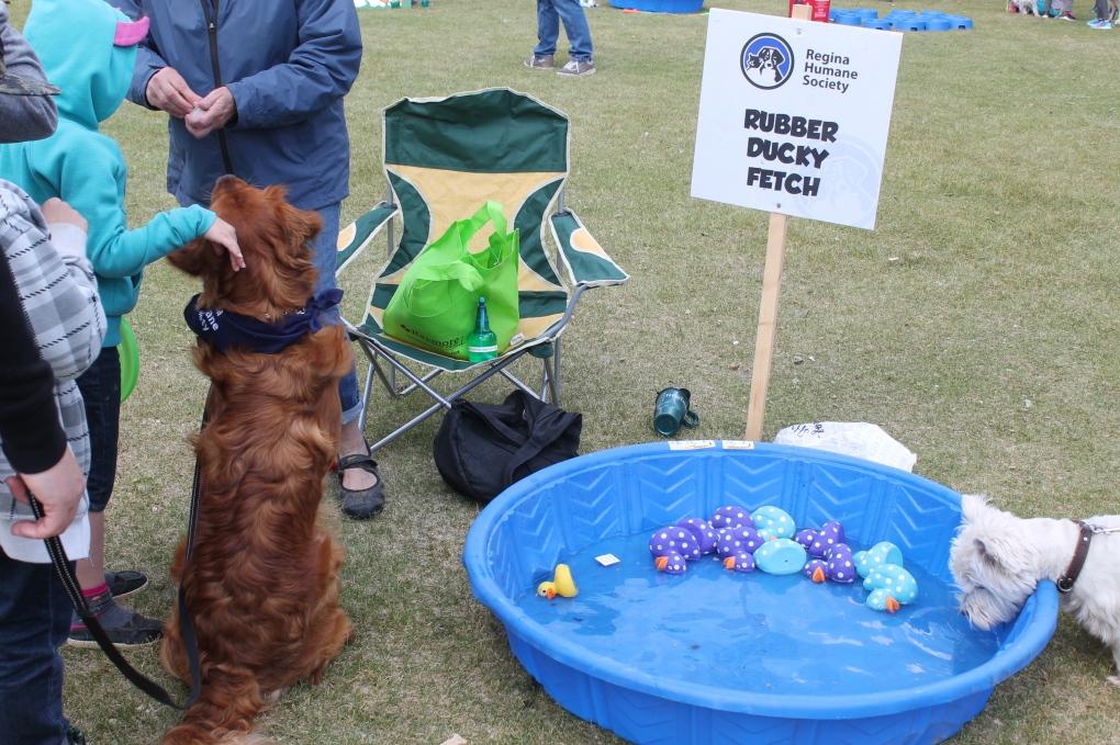 In Pictures: Regina Humane Society Dog Jog | CTV News