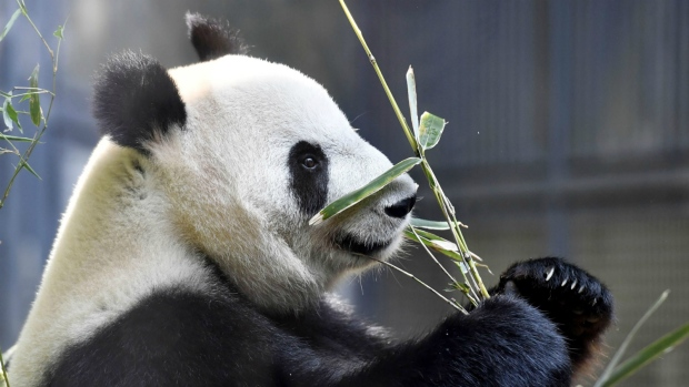 Giant panda born in Tokyo zoo, survival uncertain