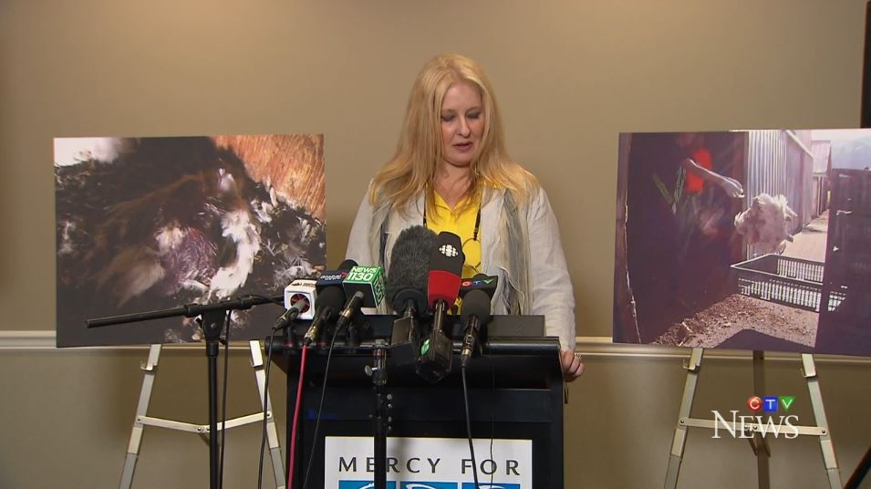 Krista Hiddema, vice president at Mercy for Animals, speaks to reporters about the release of a whistleblower video exposing animal abuse at B.C. farms. June 13, 2017. (CTV)