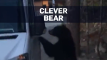 Bear casually opens driver-side door