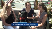 CTV Ottawa: Ottawa Humane Society Garden Party