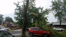Trees damaged in Arkona after