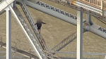 A 57-year-old man walks on the beams underneath the Pattullo Bridge, forcing officials to shut down the busy crossing. June 19, 2017. (CTV/Chopper 9)