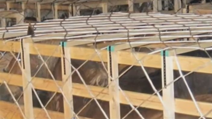 Karin Nelson says there were too many horses in each crate and they didn't have enough headroom. (Voice for Animals)