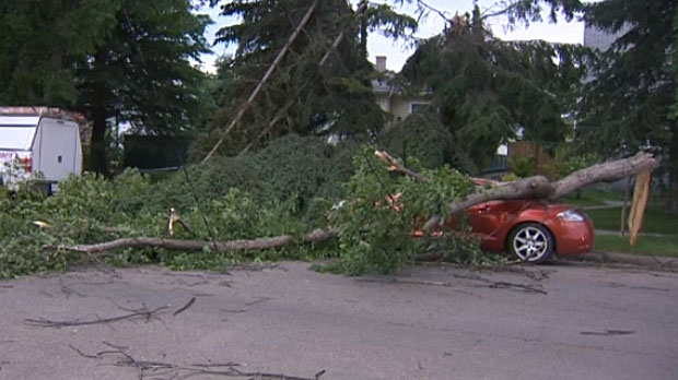 High winds toppled trees onto cars throughout the City of Red Deer on Tuesday night.
