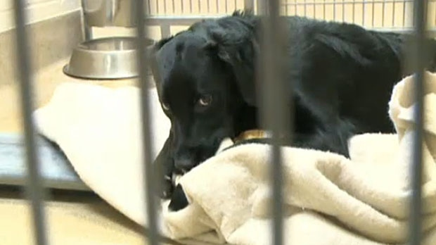 After almost 1000 animals rescued, shelter receives flood of support