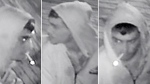 CTV Ottawa: Suspect wanted by Ottawa Police