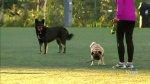 off-leash dog crackdown