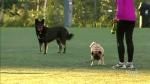off-leash dog crackdown