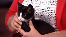 Cat adoption with Vancouver SPCA's Jodi Dunlop