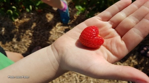 Strawberry heart. (Laura Foster/CTV Viewer)