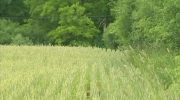 Concerns wheat field could give way to apartments