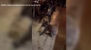 Koala strolls into Australian restaurant