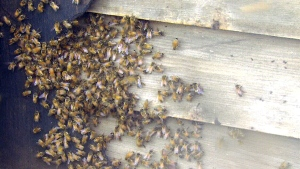 Buzz off: Crews working to remove bee infestation