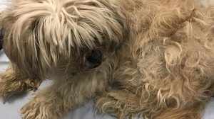 The Calgary Humane Society is working to track down the owner of this dog who was left outside the agency's office overnight. (Supplied)
