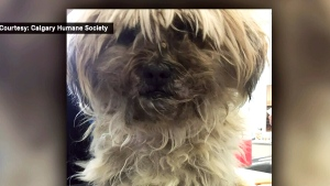CTV Calgary: Owner of abandoned dog sought