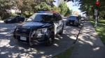 Police cruisers are seen at Moody Park in New Westminster following an alleged assault on Wednesday June 21, 2017.