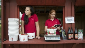 Hannah Waring, left, a student at Loudoun Valley High School, and Abby McDonough, a student at Liberty University, work in the strawberry stand at Wegmeyer Farms in Hamilton, Va. on Tuesday, May 23, 2017. (AP / Carolyn Kaster)