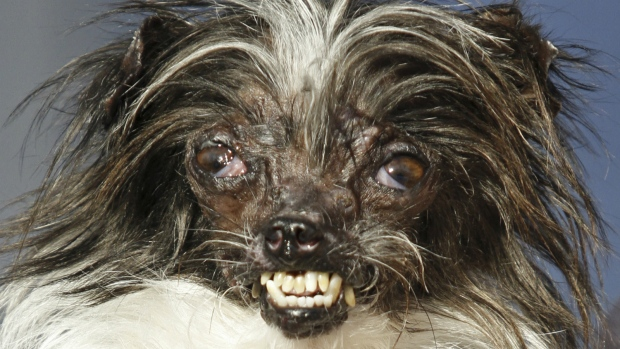World's Ugliest Dog Competition Kicks Off in California