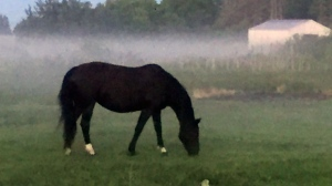 The fog rolled in last night in Gunton, MB. Photo by Christine Willey.
