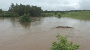 The Maitland River spills its banks in Harriston on Friday, June 23, 2017. (Alexandra Sinclair / MyNews)
