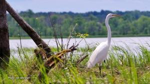 Heron on the Ottawa River at Shirley's Bay. (Jim Johnston/CTV Viewer)