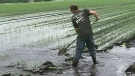 Farmers hit by flooding
