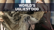 Meet Martha: World's Ugliest Dog of 2017 crowned