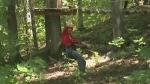 CTV Barrie: Treetop trekking