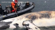 CTV National News: Investigating whale deaths
