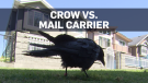 Crow keeps Canada Post from B.C. neighbourhood