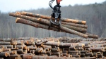 Workers sort wood at Murray Brothers Lumber Company woodlot in Madawaska, Ont. on April 25, 2017. (THE CANADIAN PRESS/Sean Kilpatrick)