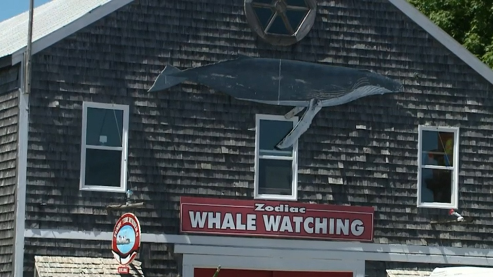 Whale watching tours are offered in the town, which isn't far from the Bay of Fundy.
