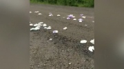 Dirty diapers are seen spread across a road in Upper Branch, N.S.