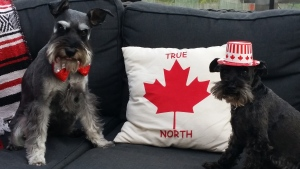 These happy dogs show that Canada's furry friends are a part of the big celebration too. (MyNews / Steve Pond)