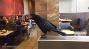Canuck accused in avian antics at McDonalds