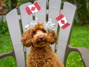 """This is Pixie celebrating Canada's Birthday."" (Photo submitted by Caqorline Bennett)"